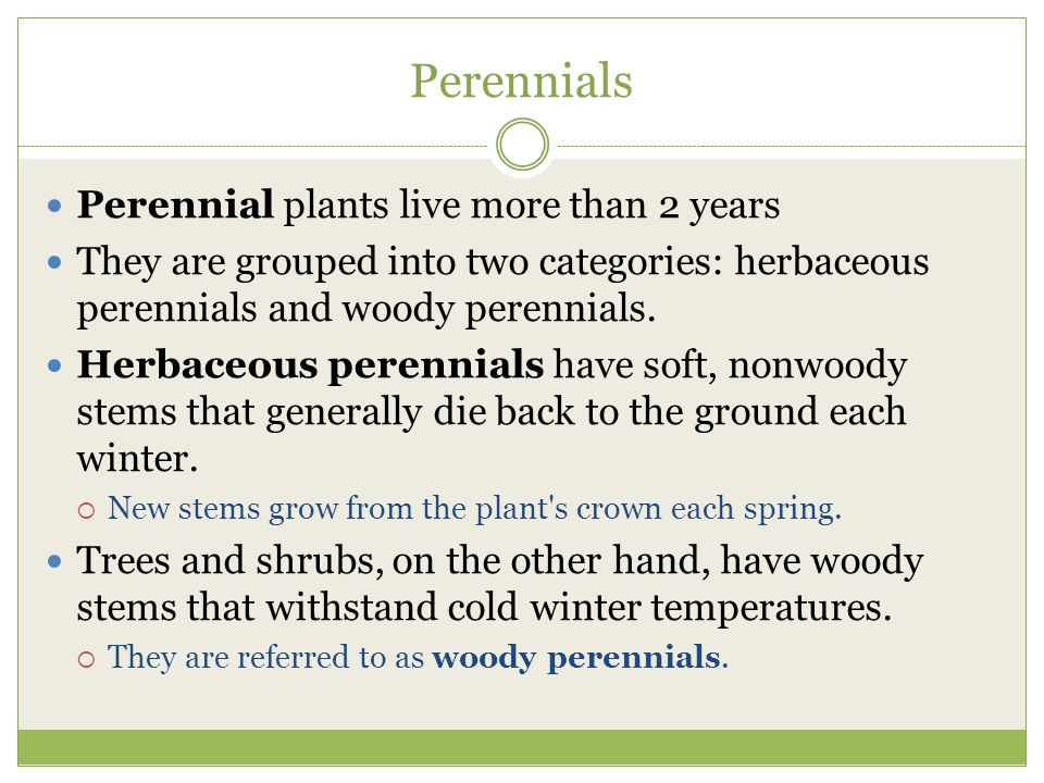 Perennials Perennial plants live more than 2 years