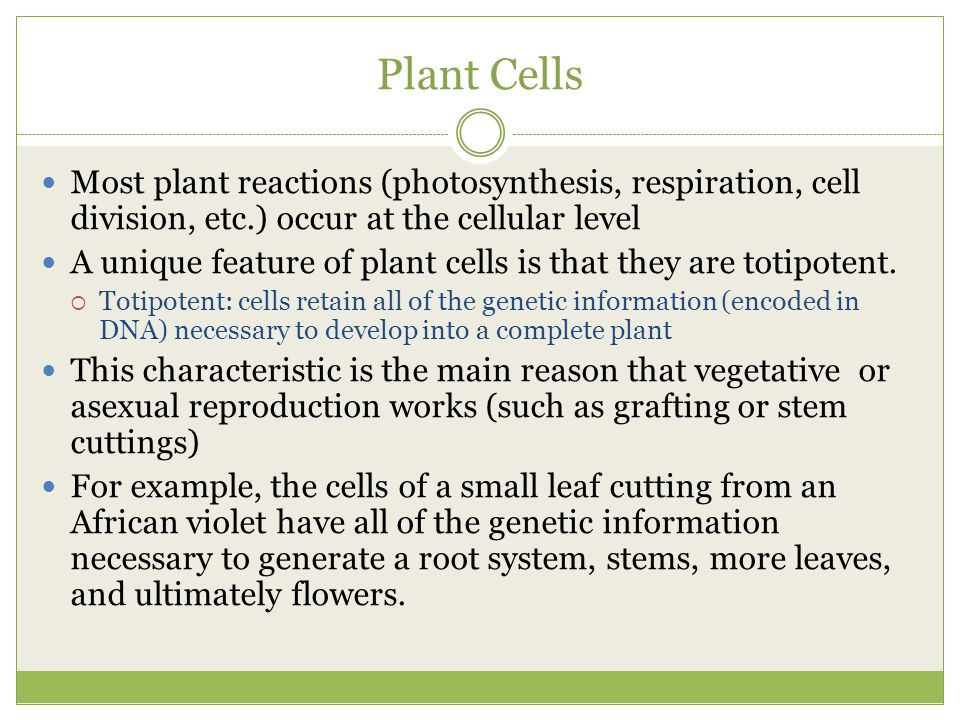 Plant Cells Most plant reactions (photosynthesis, respiration, cell division, etc.) occur at the cellular level.