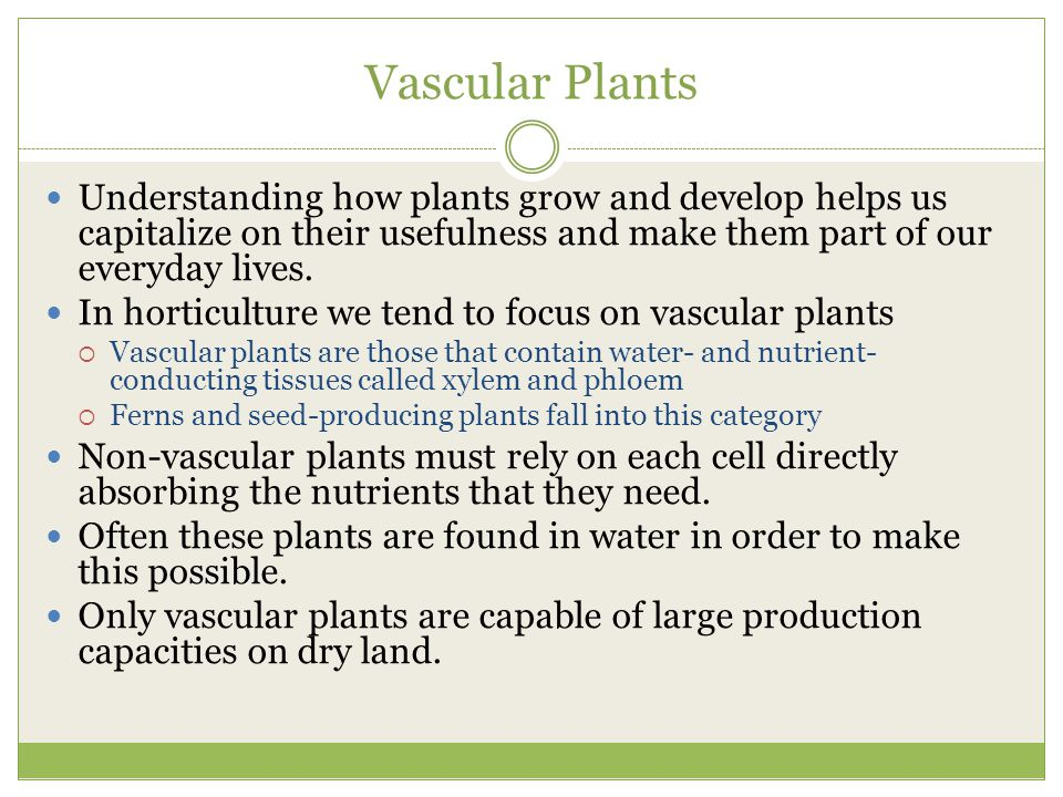 Vascular Plants Understanding how plants grow and develop helps us capitalize on their usefulness and make them part of our everyday lives.