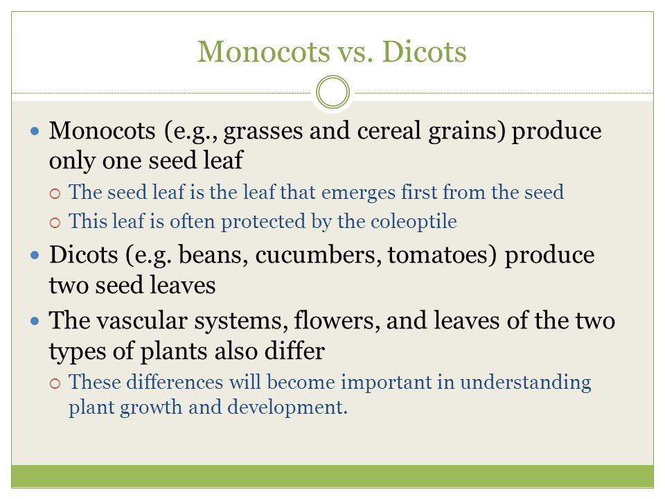 Monocots vs. Dicots Monocots (e.g., grasses and cereal grains) produce only one seed leaf.