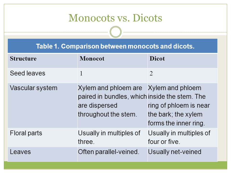 Table 1. Comparison between monocots and dicots.