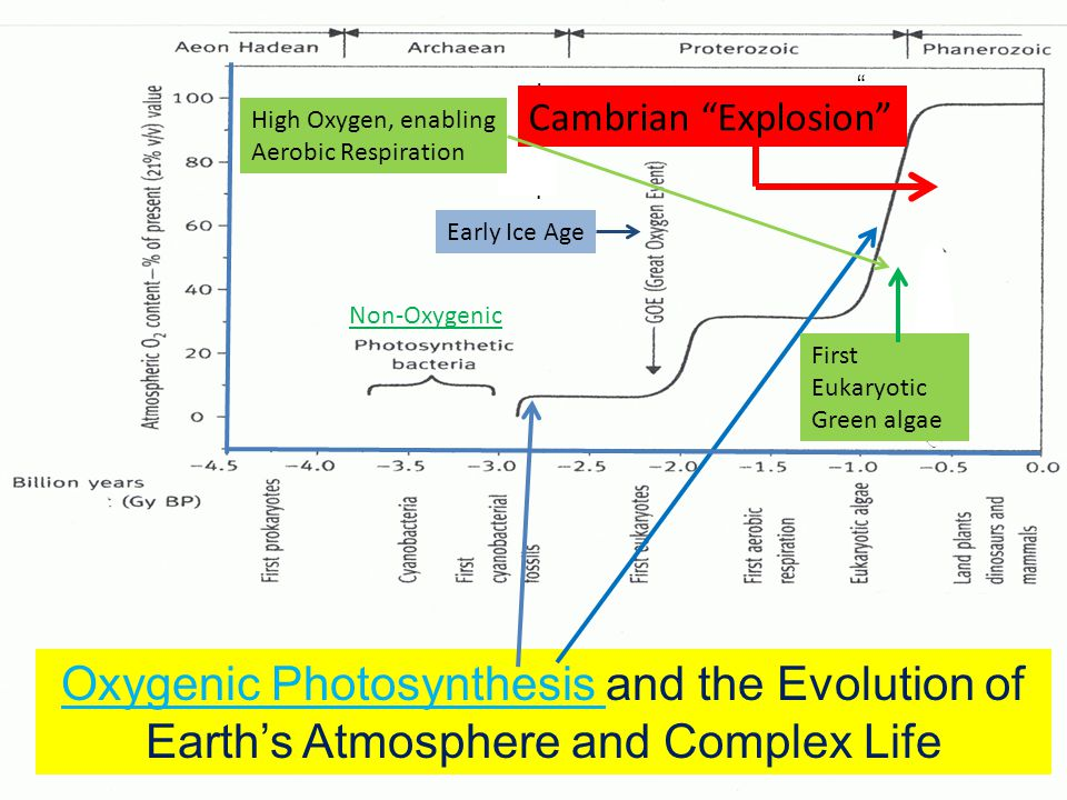 Oxygenic Photosynthesis and the Evolution of