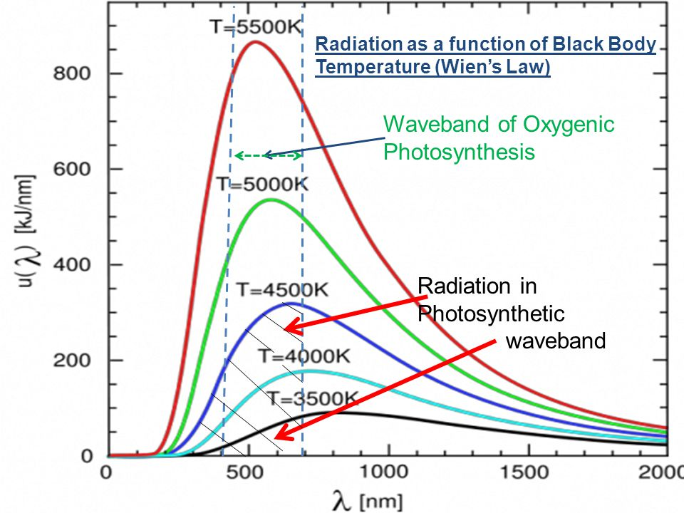 Waveband of Oxygenic Photosynthesis