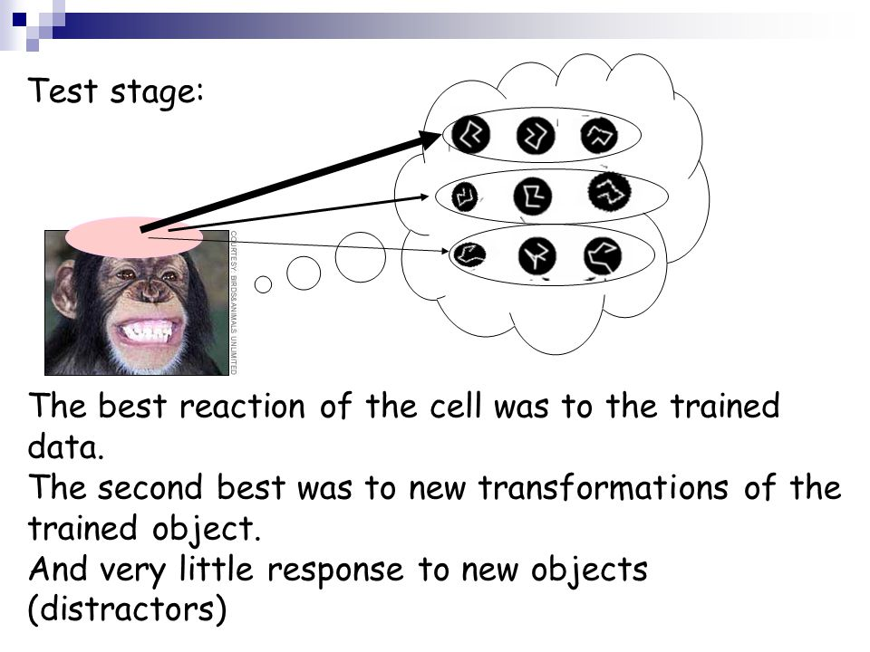 Test stage: The best reaction of the cell was to the trained data. The second best was to new transformations of the trained object.