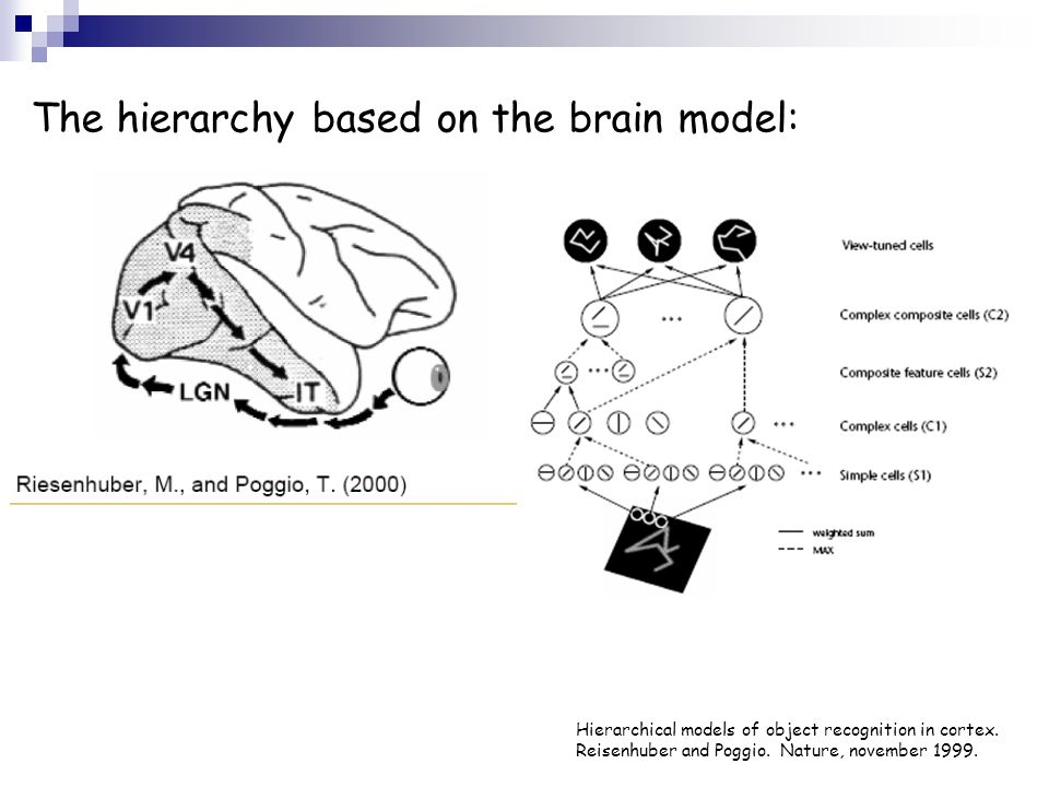 The hierarchy based on the brain model: