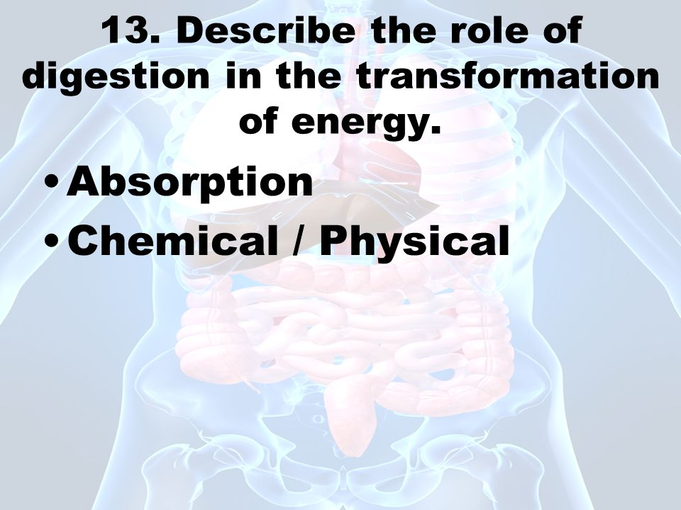 13. Describe the role of digestion in the transformation of energy.