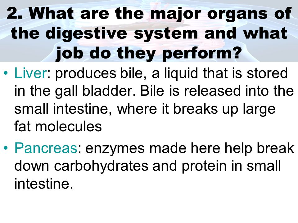 2. What are the major organs of the digestive system and what job do they perform
