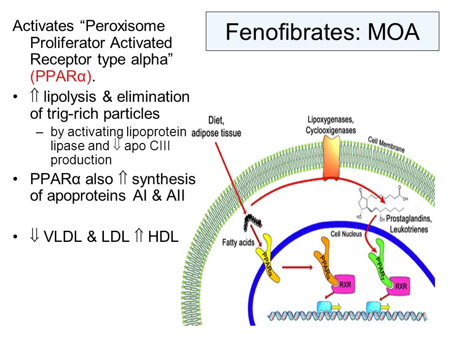 Fenofibrates: MOA Activates Peroxisome Proliferator Activated Receptor type alpha (PPARα).  lipolysis & elimination of trig-rich particles.
