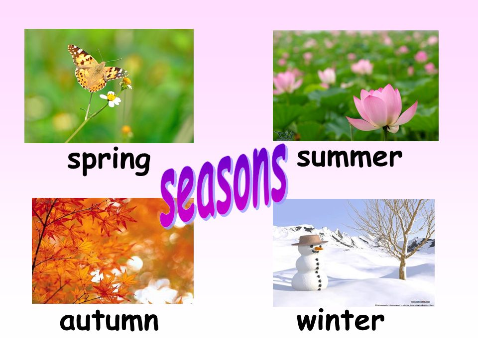 spring summer seasons autumn winter