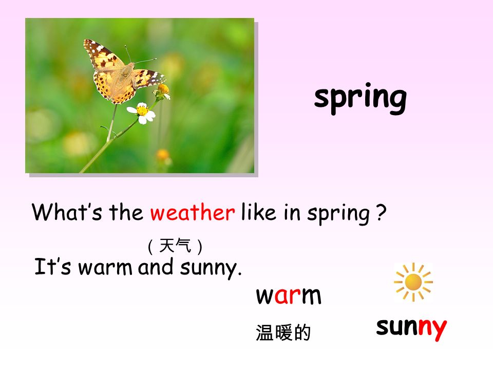 spring warm sunny What's the weather like in spring (天气)