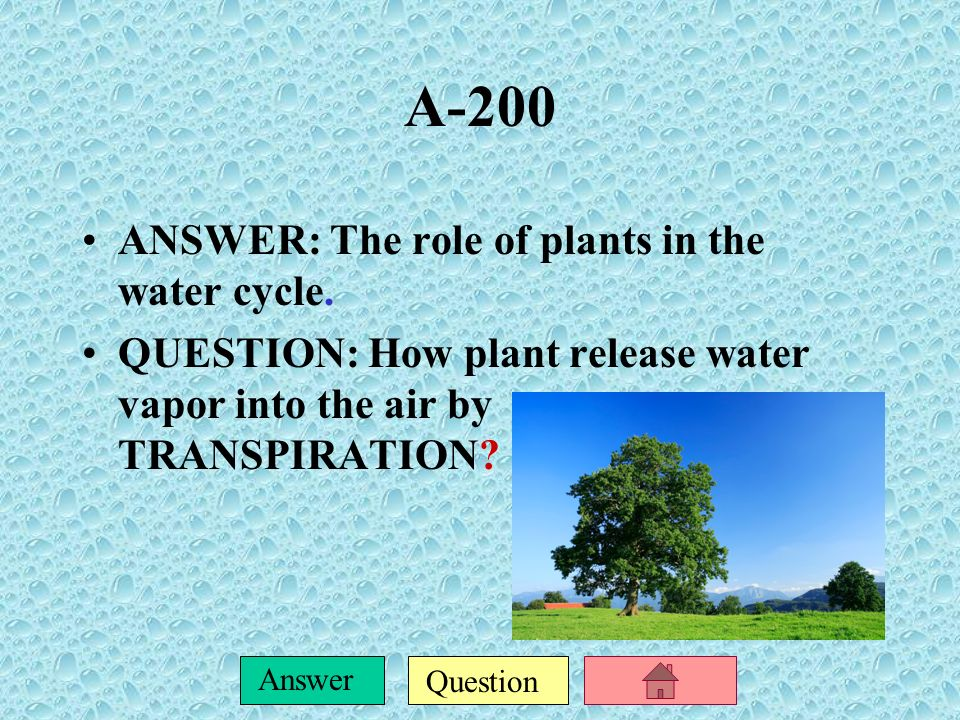 A-200 ANSWER: The role of plants in the water cycle.