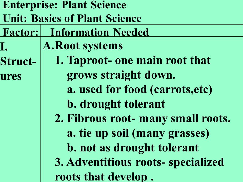 1. Taproot- one main root that grows straight down.
