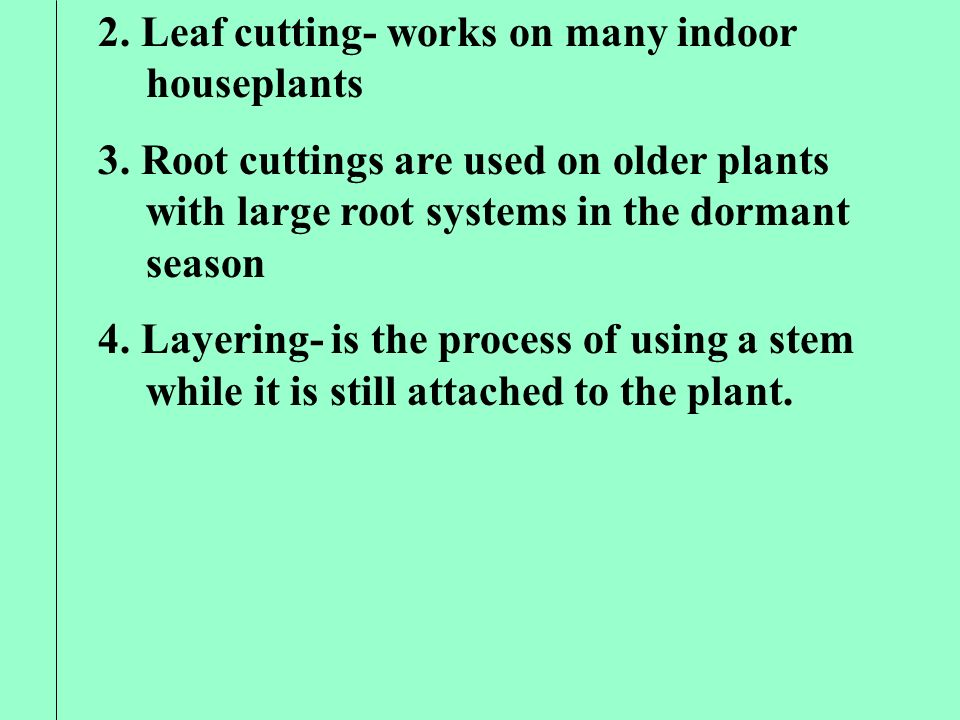 2. Leaf cutting- works on many indoor houseplants