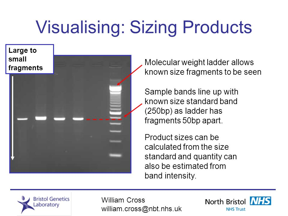 Visualising: Sizing Products