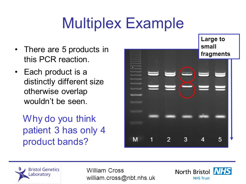 Multiplex Example Why do you think patient 3 has only 4 product bands