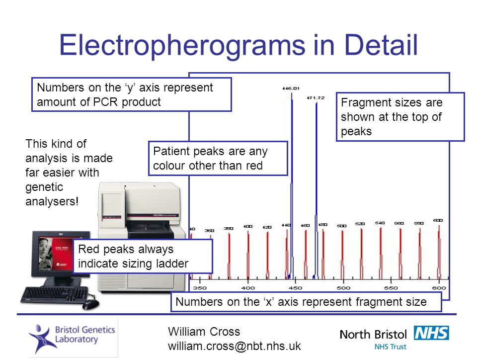Electropherograms in Detail