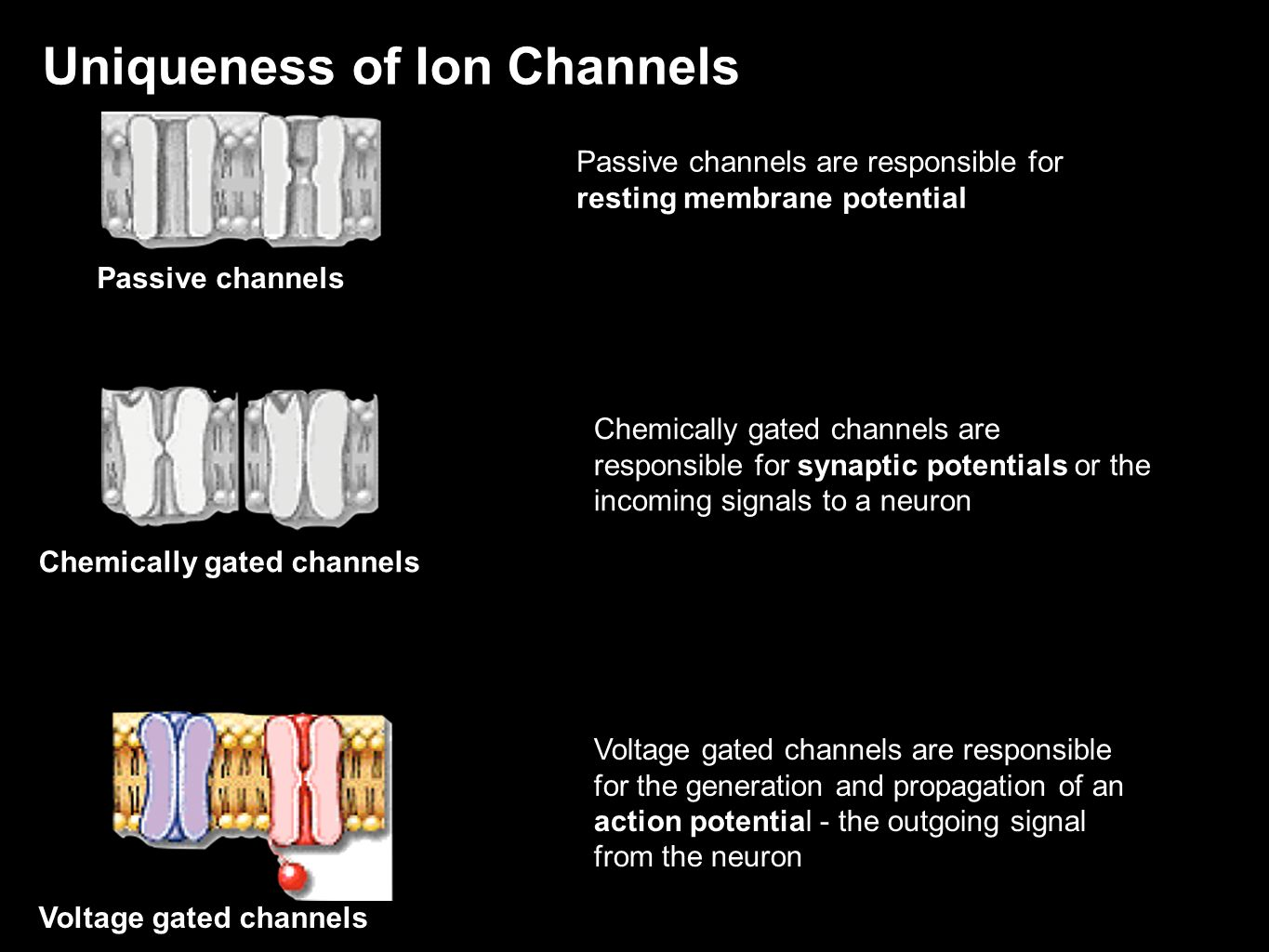 Uniqueness of Ion Channels
