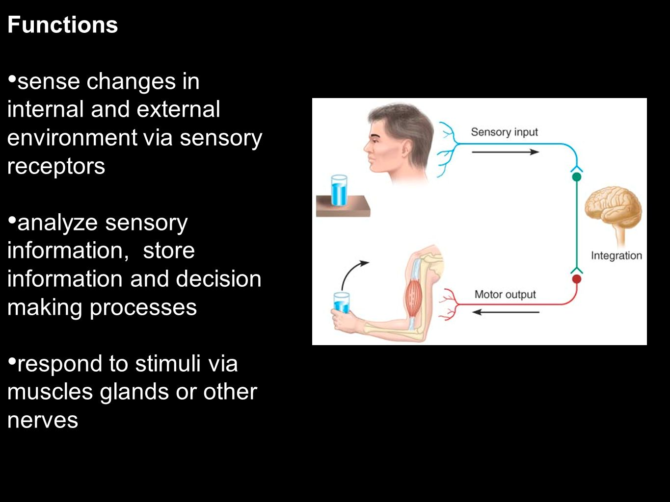 Functions sense changes in internal and external environment via sensory receptors.