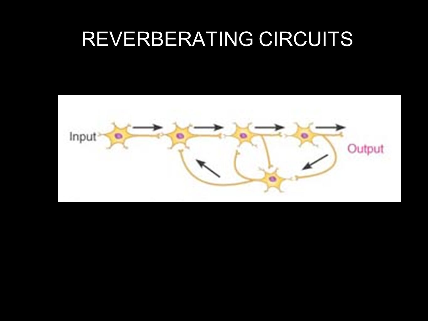 REVERBERATING CIRCUITS