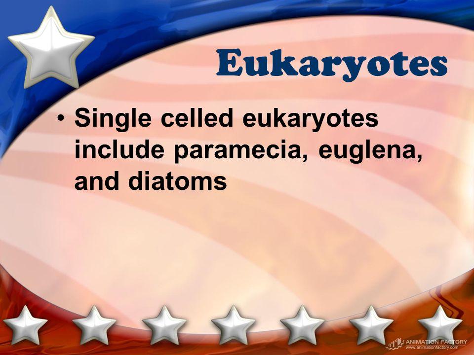 Eukaryotes Single celled eukaryotes include paramecia, euglena, and diatoms