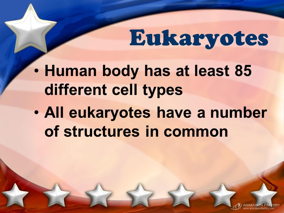 Eukaryotes Human body has at least 85 different cell types