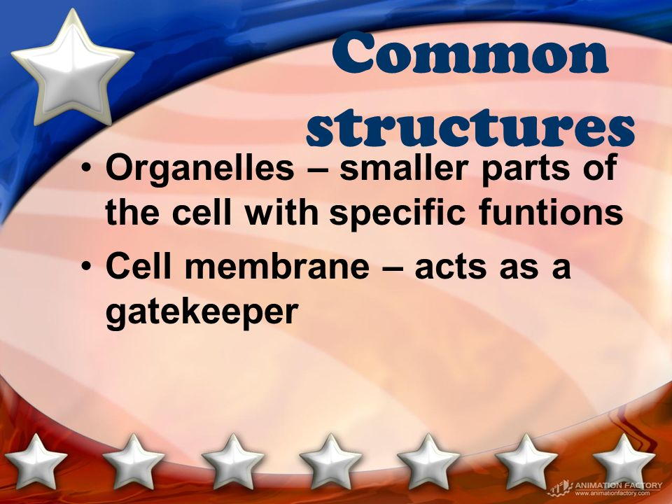 Common structures Organelles – smaller parts of the cell with specific funtions.