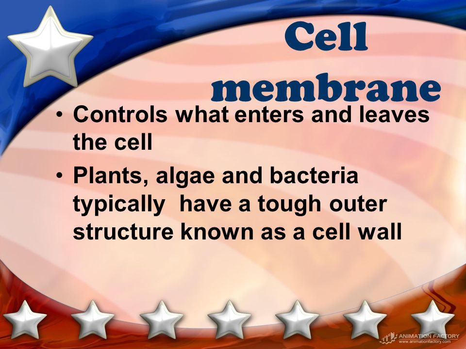 Cell membrane Controls what enters and leaves the cell