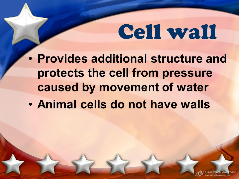 Cell wall Provides additional structure and protects the cell from pressure caused by movement of water.