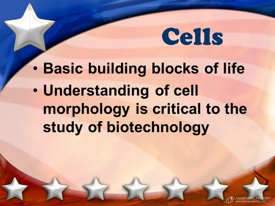 Cells Basic building blocks of life