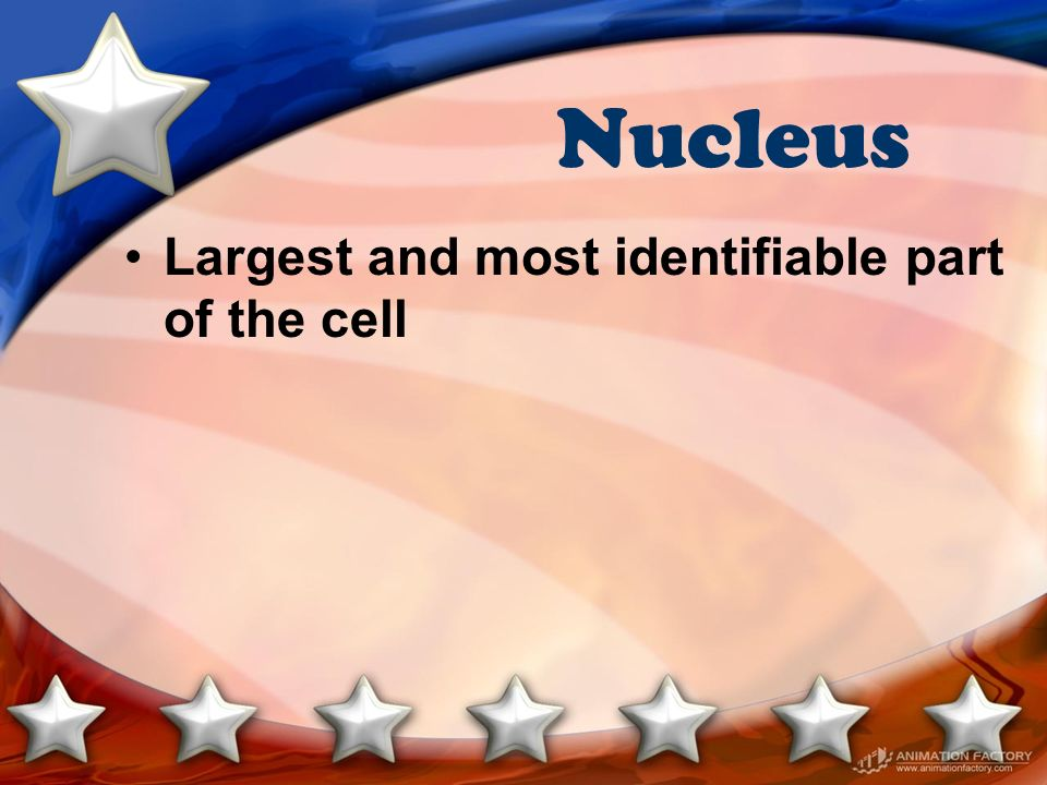 Nucleus Largest and most identifiable part of the cell