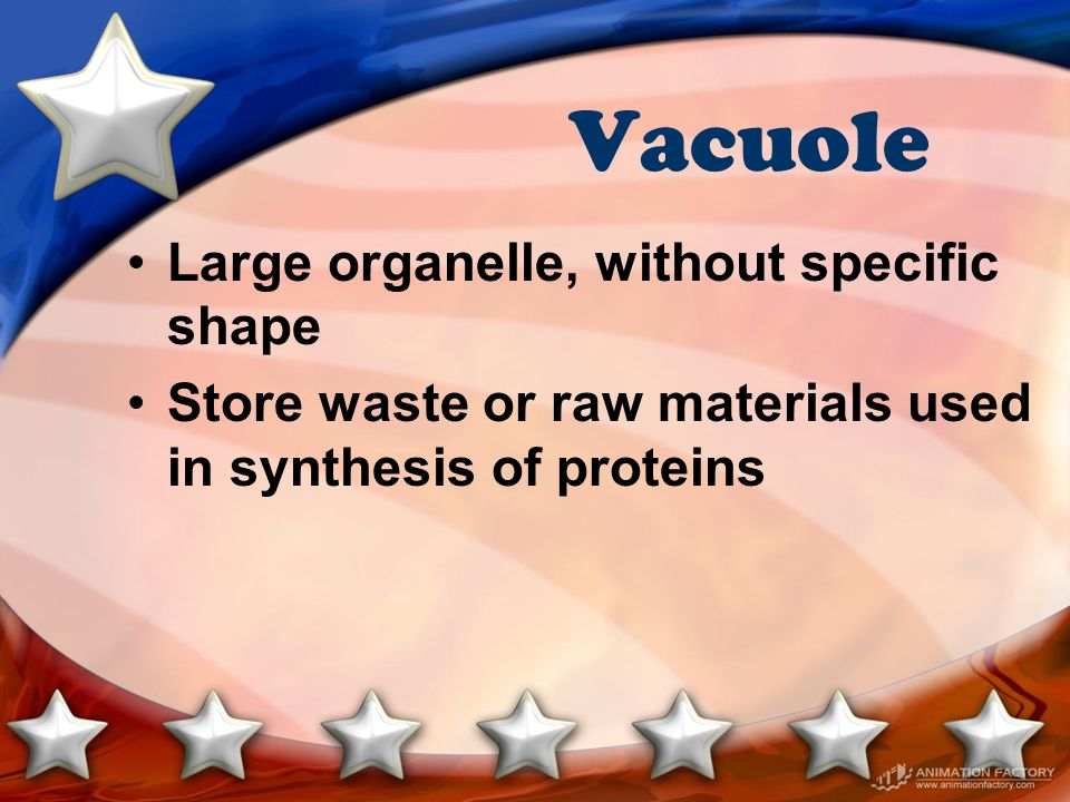 Vacuole Large organelle, without specific shape
