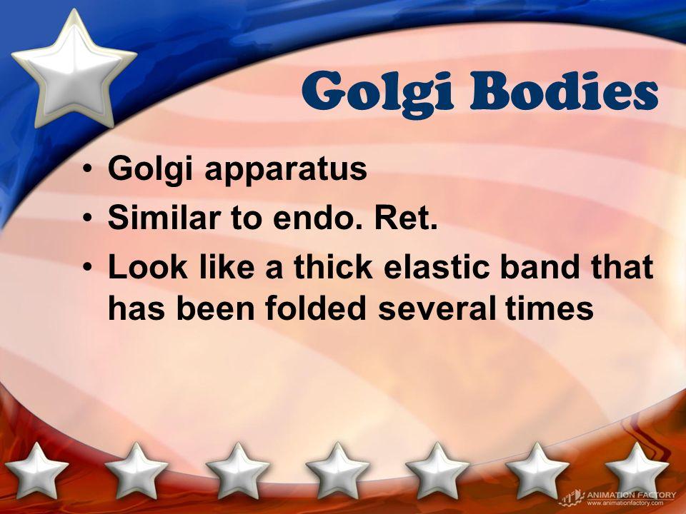Golgi Bodies Golgi apparatus Similar to endo. Ret.