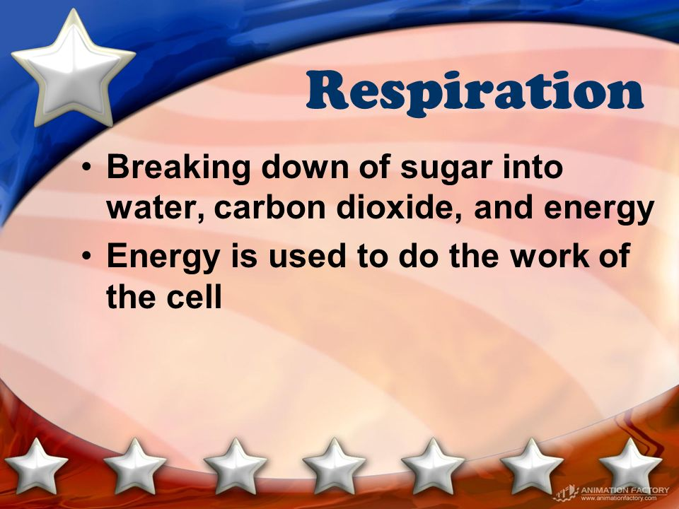 Respiration Breaking down of sugar into water, carbon dioxide, and energy.