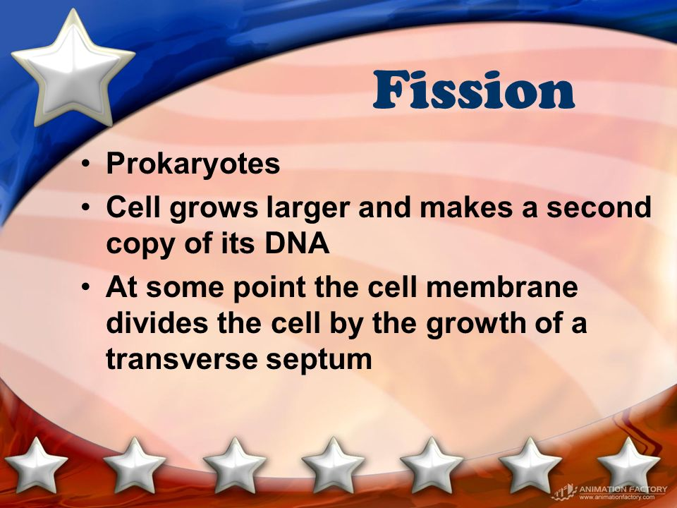 Fission Prokaryotes. Cell grows larger and makes a second copy of its DNA.
