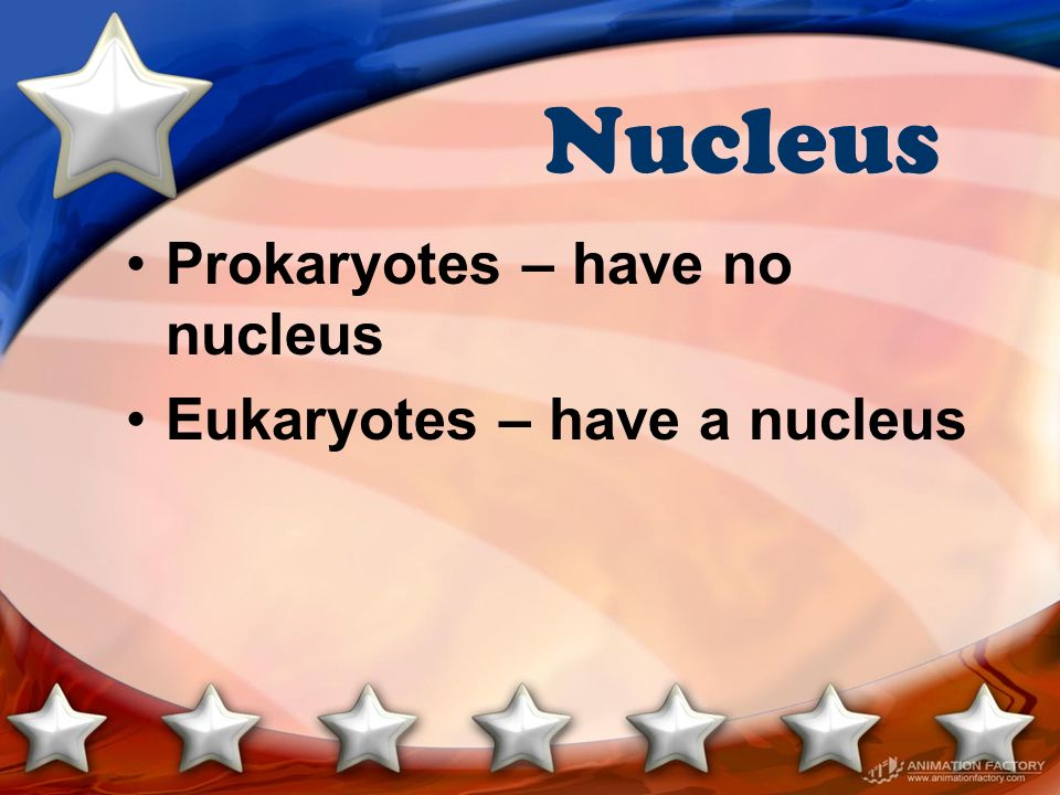 Nucleus Prokaryotes – have no nucleus Eukaryotes – have a nucleus