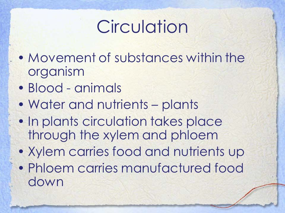 Circulation Movement of substances within the organism Blood - animals