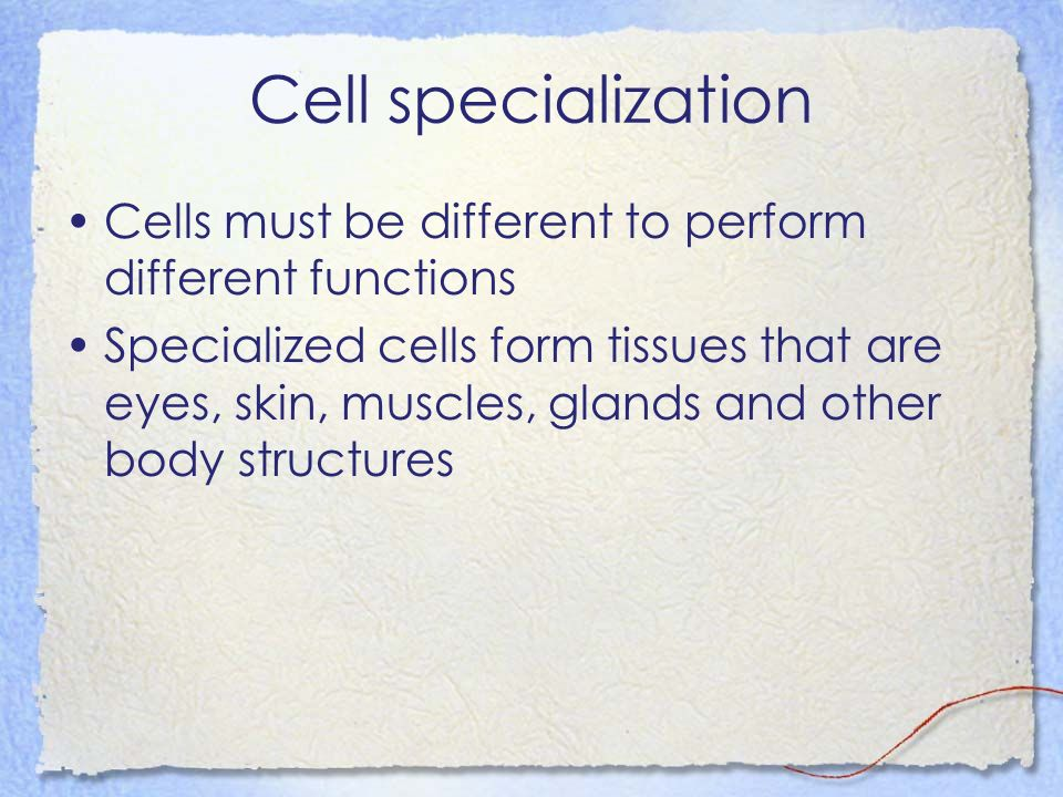 Cell specialization Cells must be different to perform different functions.