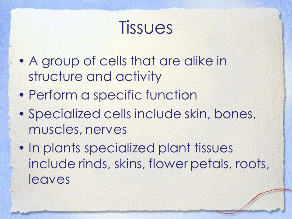 Tissues A group of cells that are alike in structure and activity