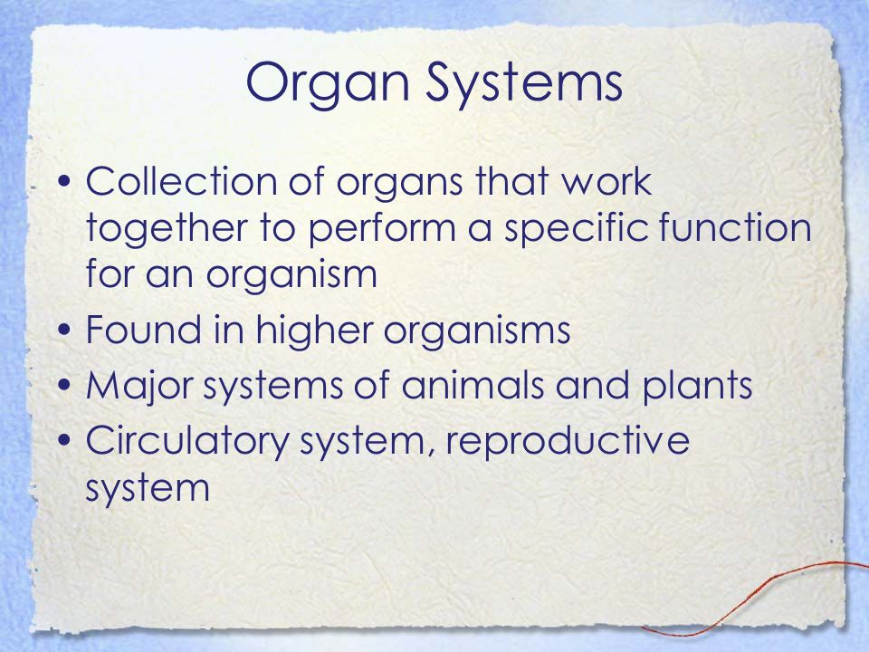 Organ Systems Collection of organs that work together to perform a specific function for an organism.