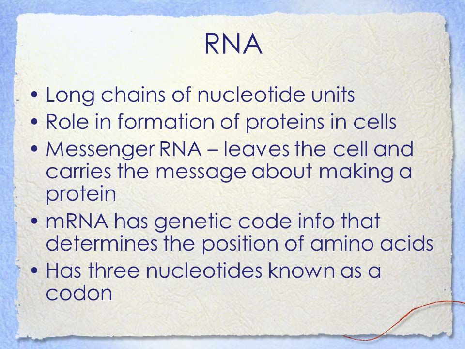RNA Long chains of nucleotide units