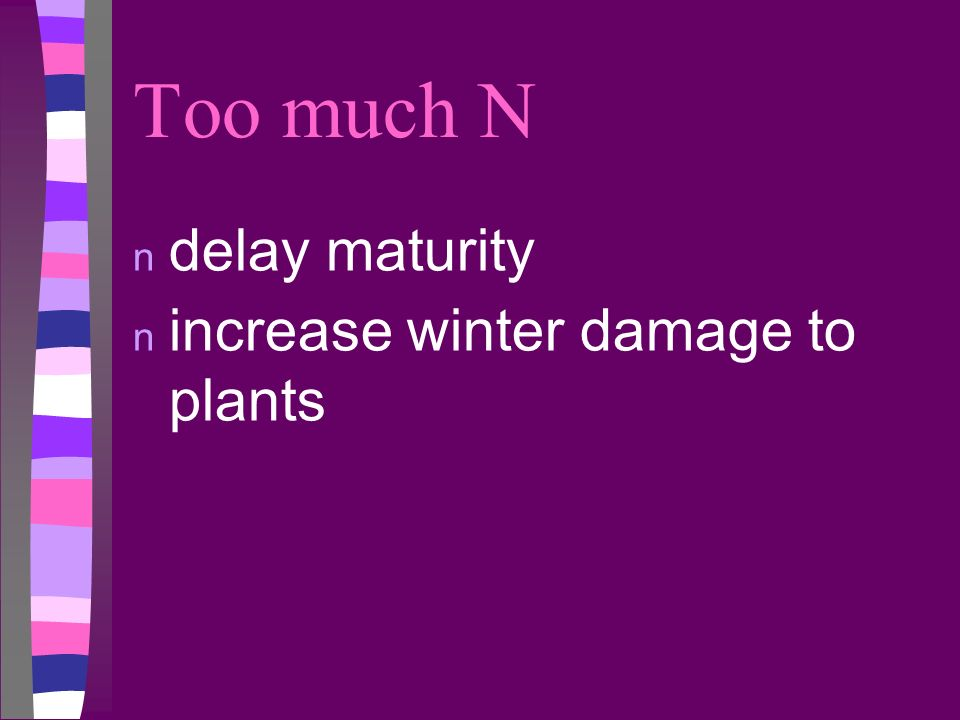 Too much N delay maturity increase winter damage to plants