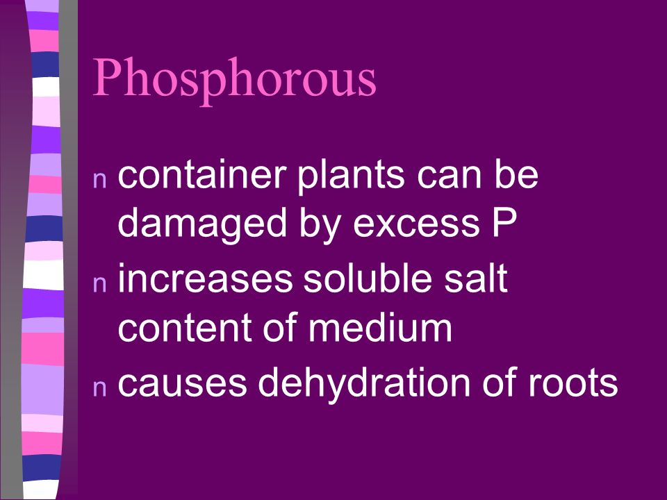Phosphorous container plants can be damaged by excess P