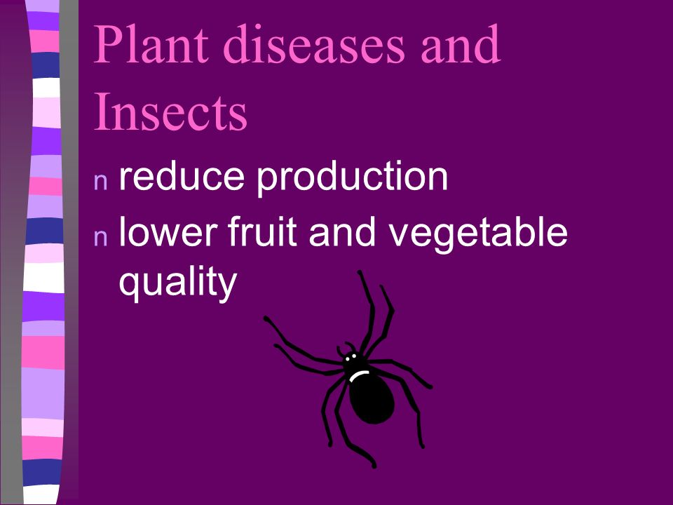 Plant diseases and Insects