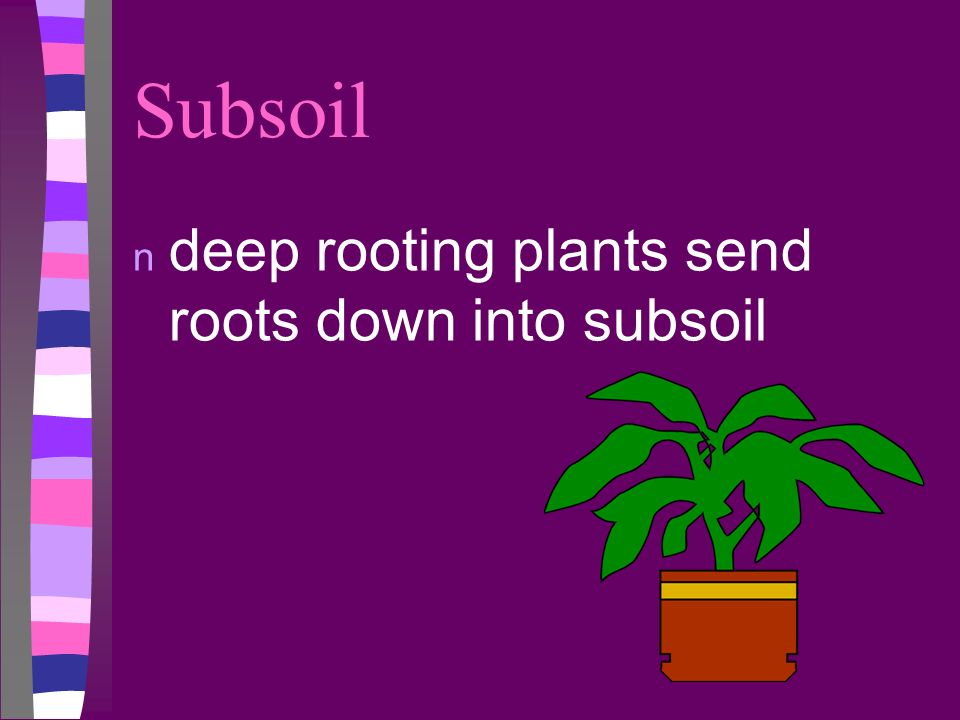 Subsoil deep rooting plants send roots down into subsoil