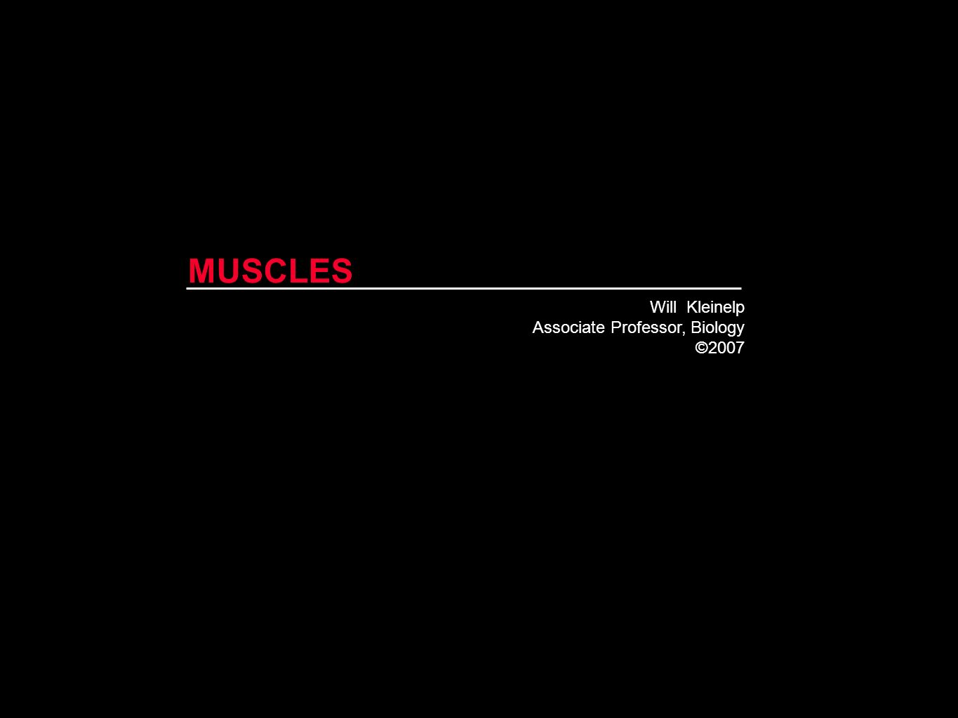 MUSCLES Will Kleinelp Associate Professor, Biology ©2007