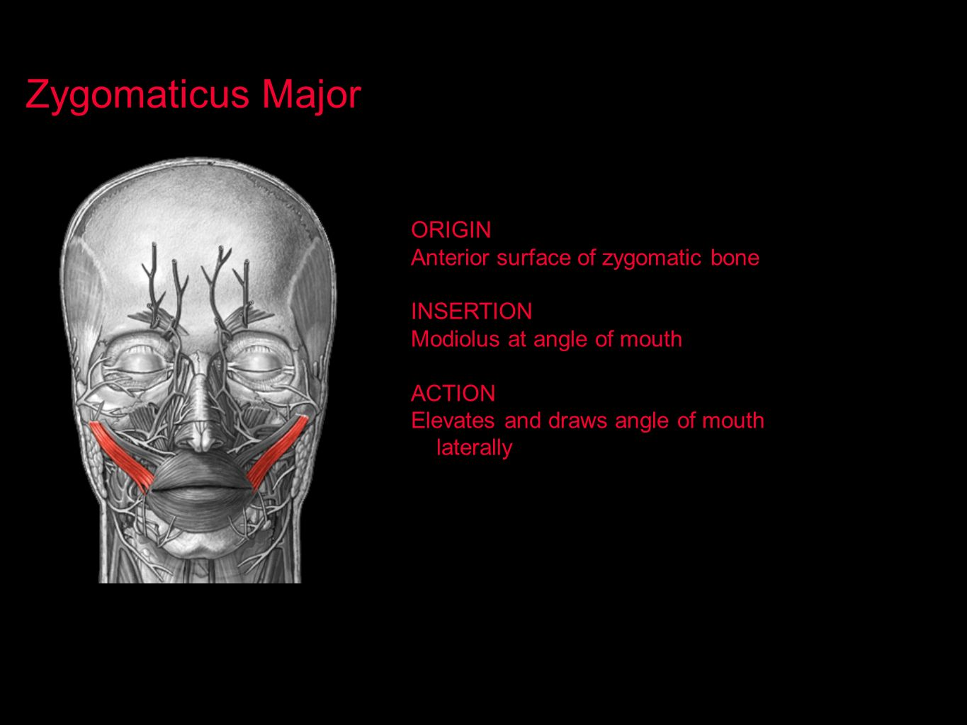 Zygomaticus Major ORIGIN Anterior surface of zygomatic bone INSERTION