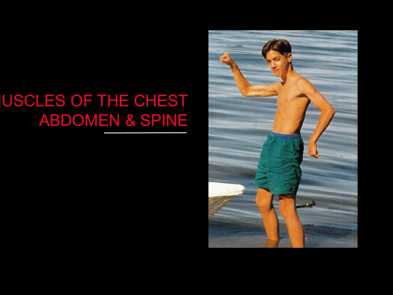 MUSCLES OF THE CHEST ABDOMEN & SPINE