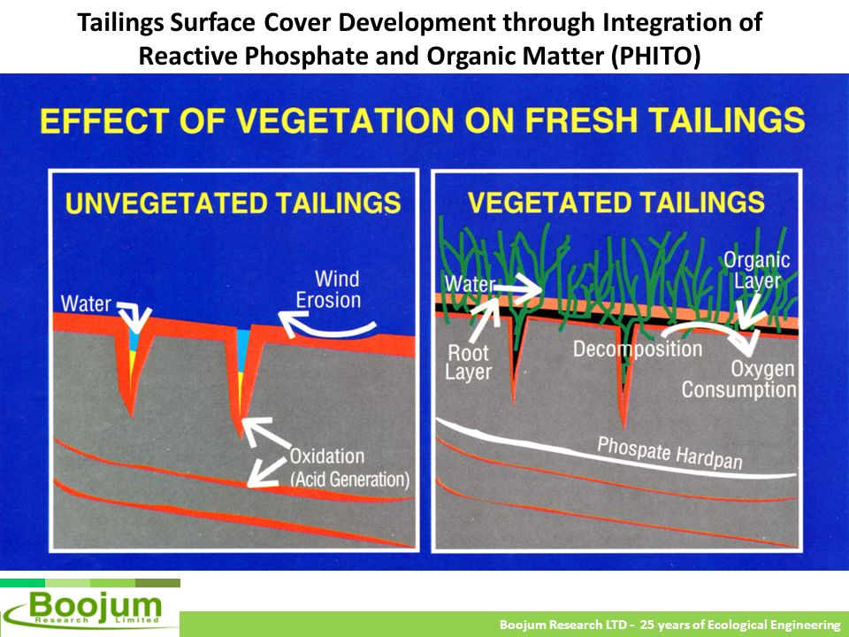 Tailings Surface Cover Development through Integration of Reactive Phosphate and Organic Matter (PHITO)