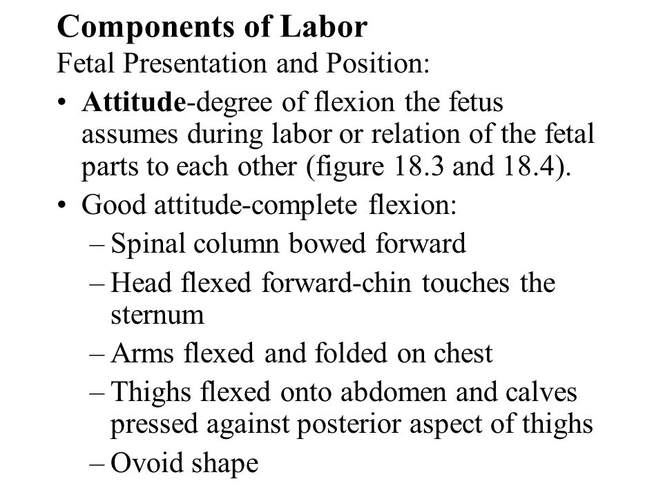 Components of Labor Fetal Presentation and Position: