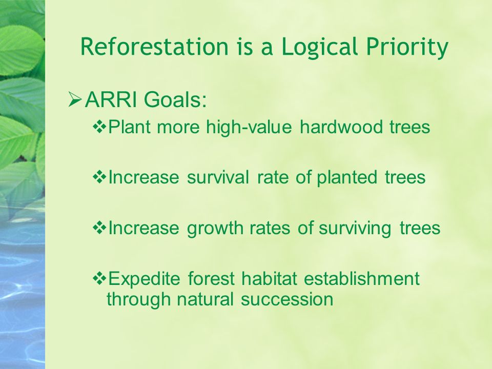 Reforestation is a Logical Priority